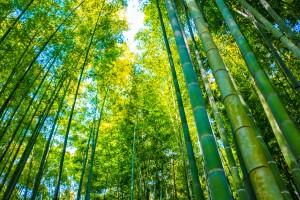 Ximira bamboo garden