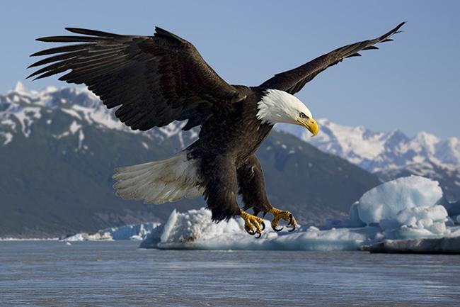 Animal 02 - eagle.jpg