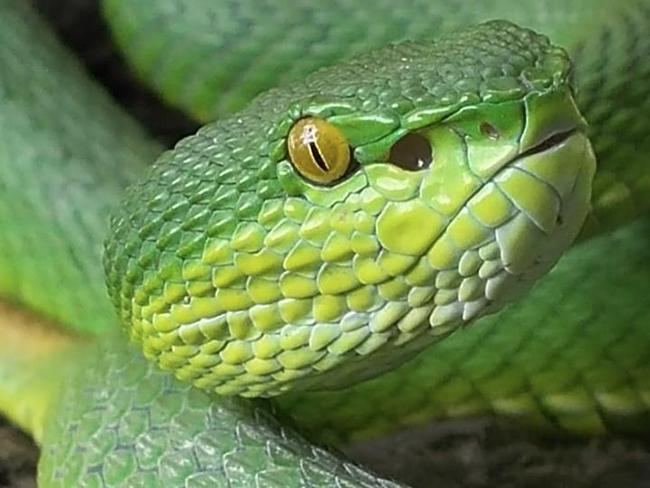 Animal 03 - Viper.jpg