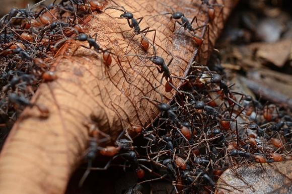 Animal 04 - Ants.jpg