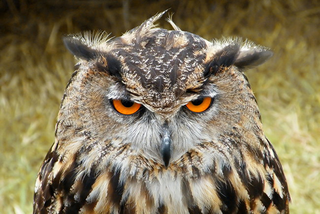 Animal 06 - Owl.jpg
