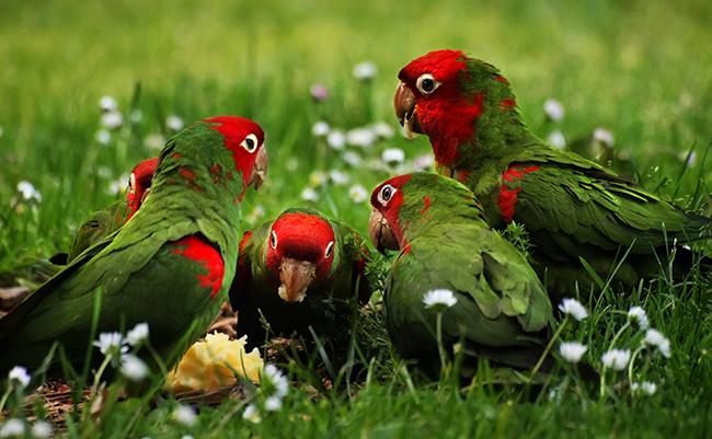 Animal 09 - Parrots.jpg